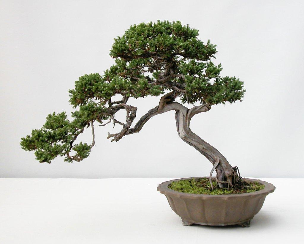 Old japantown for Bonsai tree pics