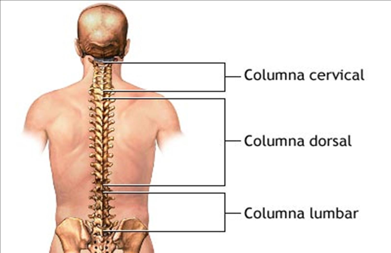 Duele constantemente el músculo del cuello