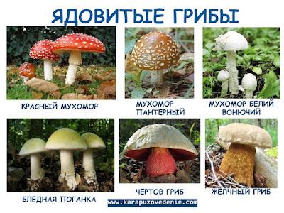 фото картинки несъедобных грибов для детей