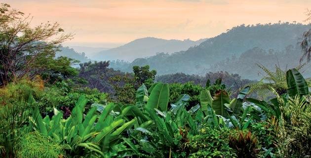 Chiapas, cafetal, Nestlé,