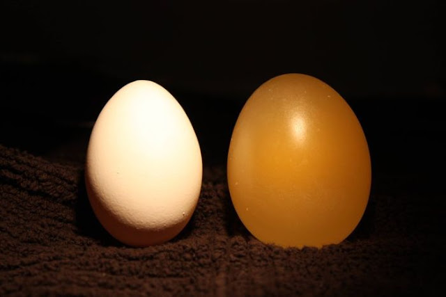 naked egg experiment, how to make naked egg, fun experiment, fun fact