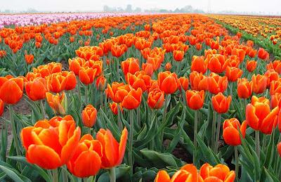 фото -цветов