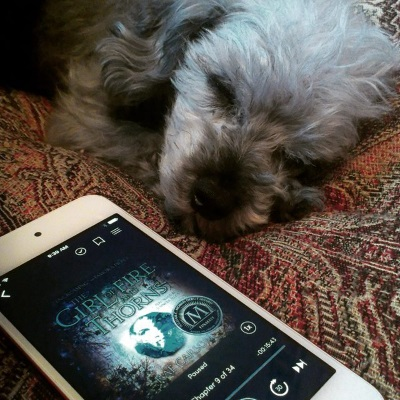 Murchie lays on a red tapestried comforter. His head rests on his paws, slightly twisted towards the viewer. His eyes are closed. Beside him is a white-bordered iPod with the cover of The Girl of Fire and Thorns on its screen. The cover features an indistinct picture of a girl encased in a blue-tinted jewel against a variegated blue background.