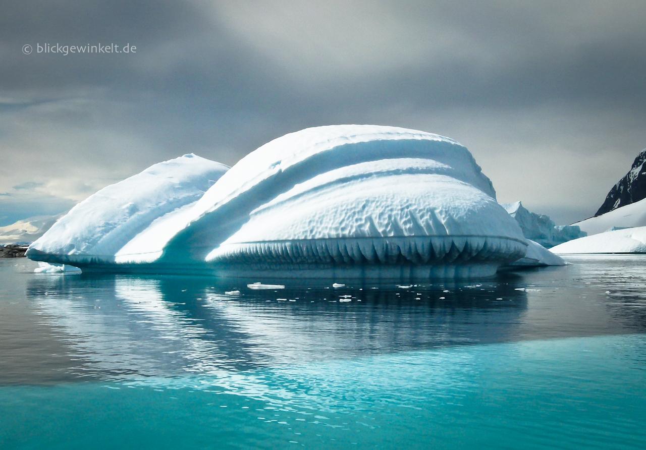 Antarktis, Eisberg, großzahniger Eisfrosch