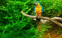Lonely Macaw Parrot