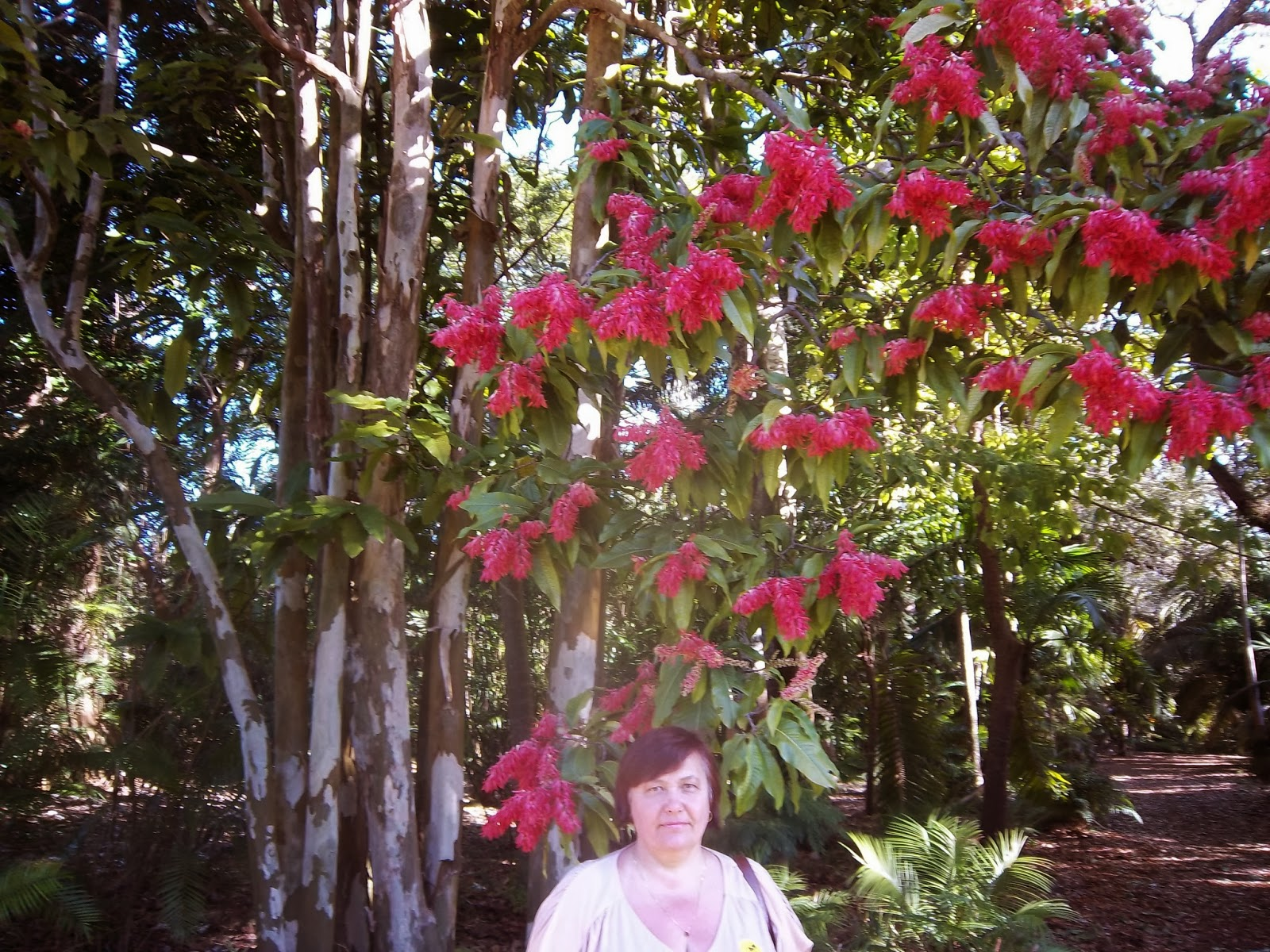 Liliana Usvat - Reforestation and Medicinal use of the Trees ...