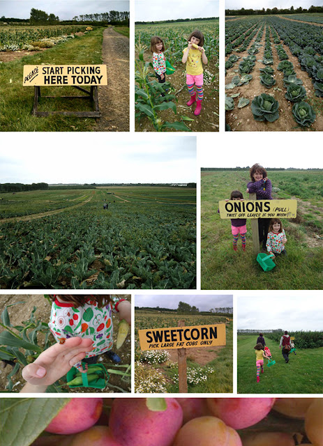 Roundstone Farm Pick-your-own