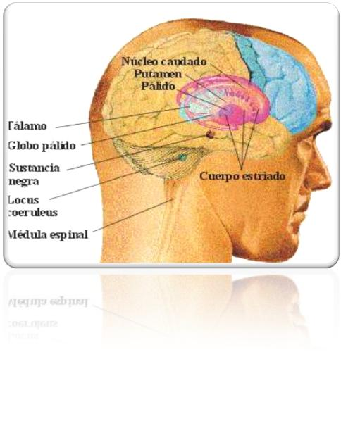 Neuropraxias: NEUROPSICOLOGIA DE LA PRAXIAS