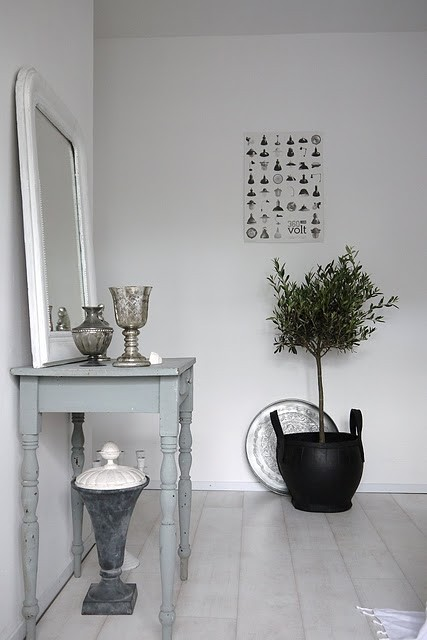 how to grow an olive tree indoors