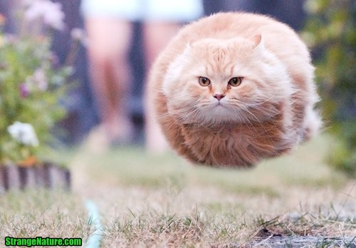 Funny Cat Photos - Flying Cat