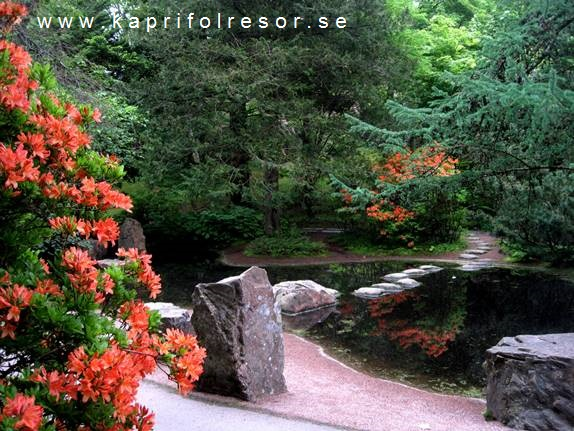 sten trädgård göteborg