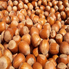 raw organic Oregon Hazelnuts
