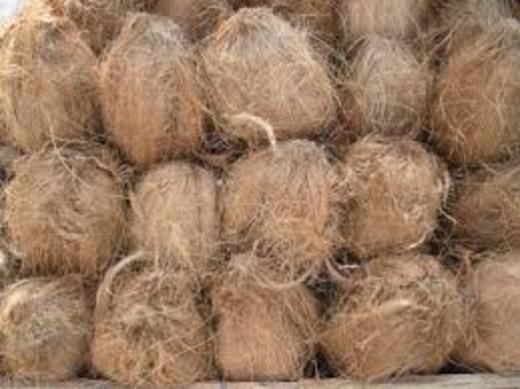 नारियल के आयुर्वेदिक फायदे