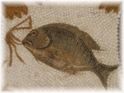 De re coqvinaria vivaria piscium para nuestro hermes for Vivero para peces