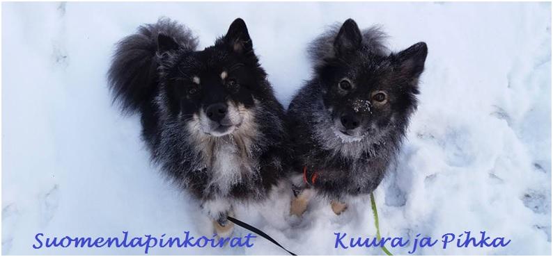 Suomenlapinkoirat Kuura ja Pihka