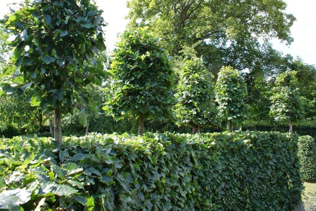 KJELD SLOT: GREEN SCREENS