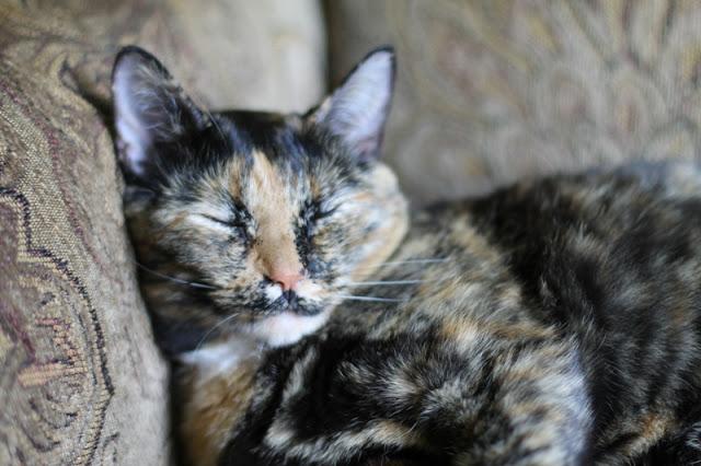 Kali snoozing