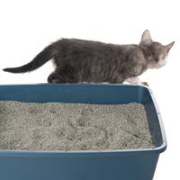 Caixinha de areia e higiene