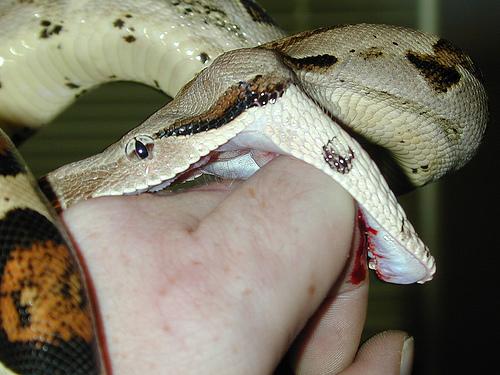 Во сне укусила змея ребенка – возможные проблемы со здоровьем у детей в семье.