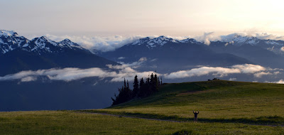 Olympic National Park Hiking Picture