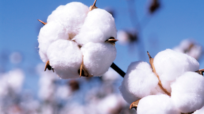 Pakistan Cotton Industry