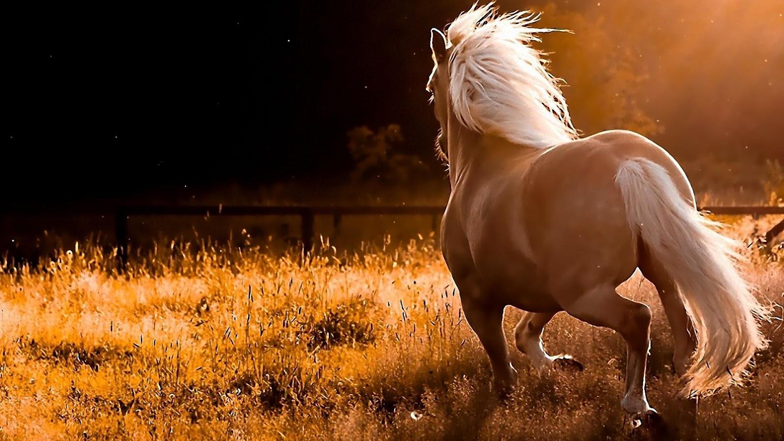 Beautiful horse hd wallpapers 2013