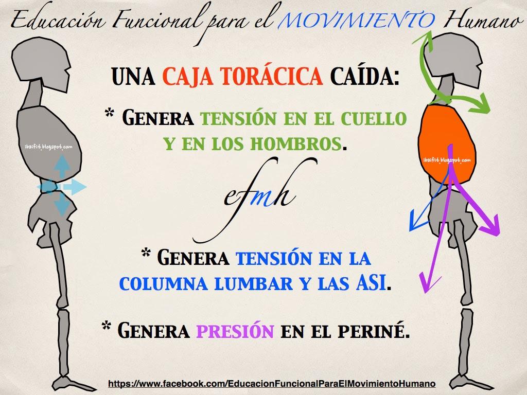 SABES LO QUE GENERA UNA CAJA TORÁCICA CAÍDA? | Educación Funcional ...