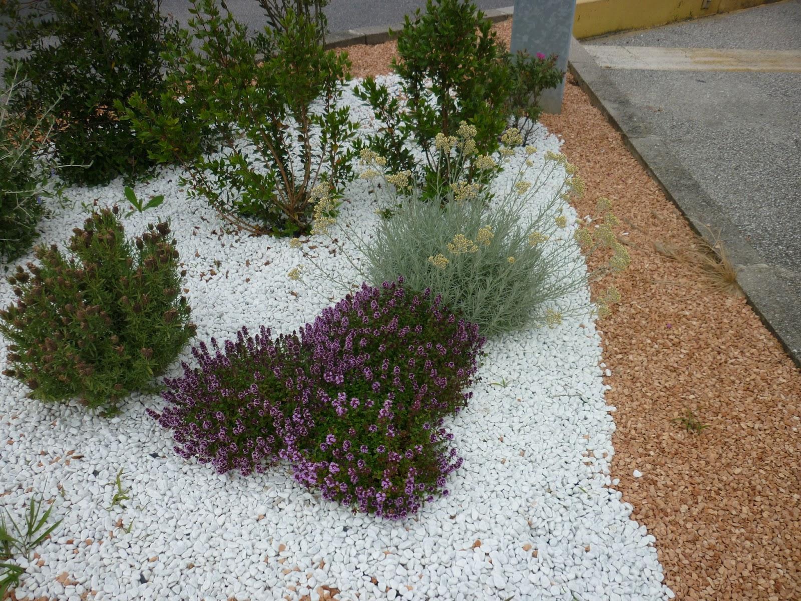 Kailash energia come risparmiare acqua in giardino lo for Piccoli giardini rocciosi