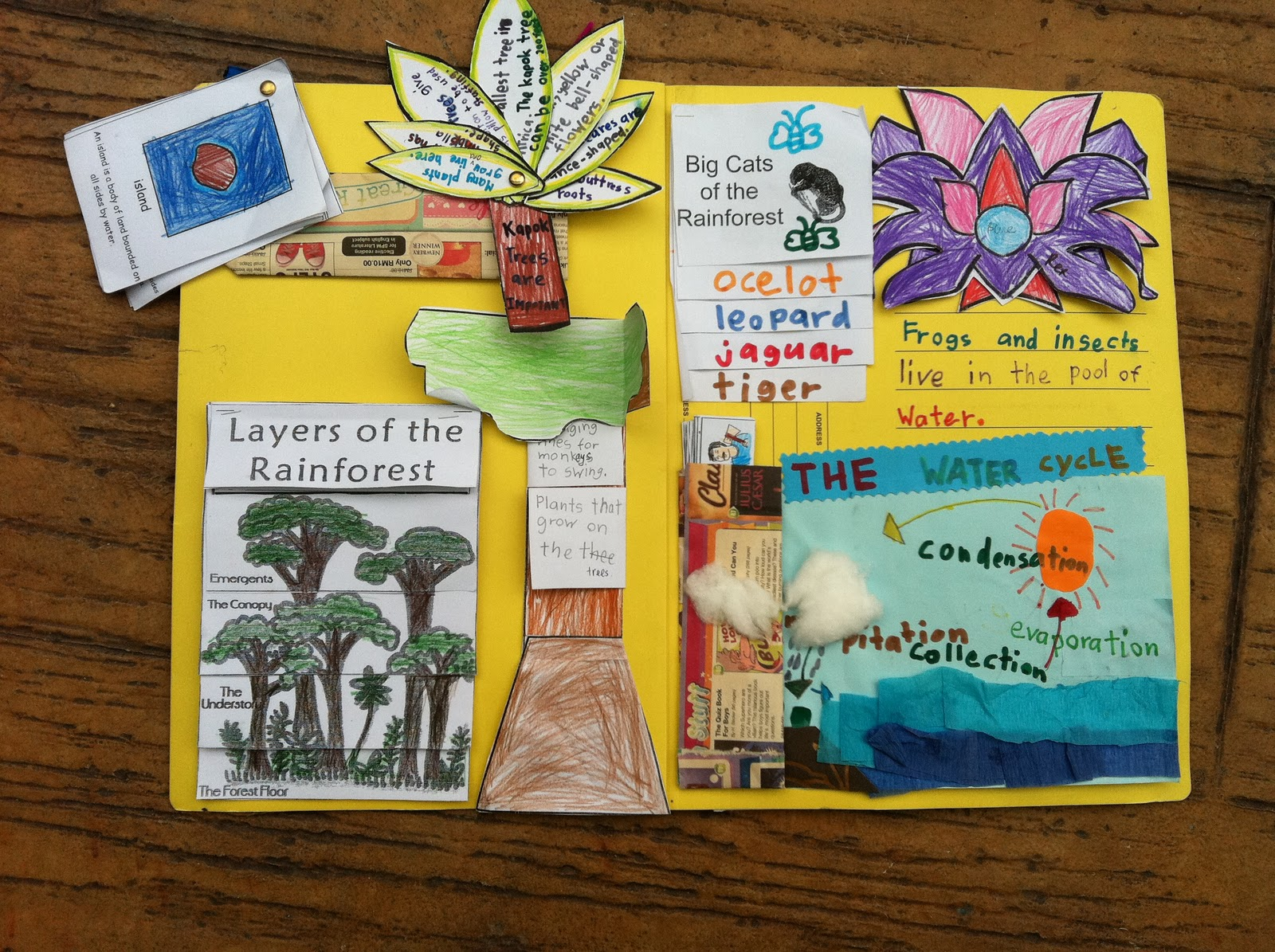 Great Kapok Tree Lapbook Project on Water Cycle Coloring Page