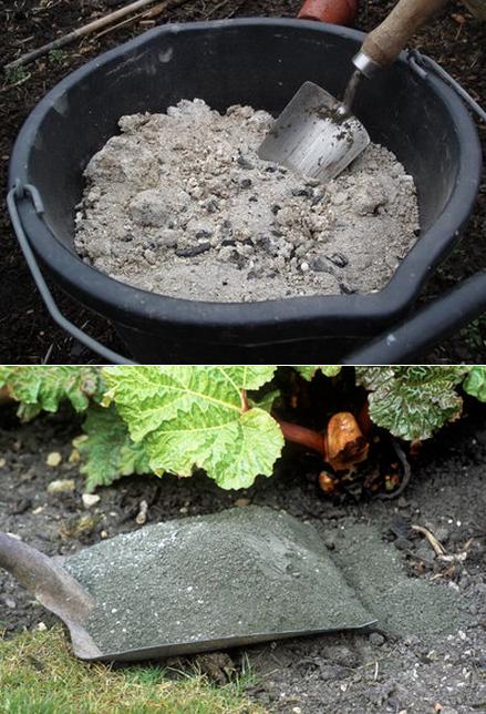 Using wood ashes in the garden #Organic_Gardening
