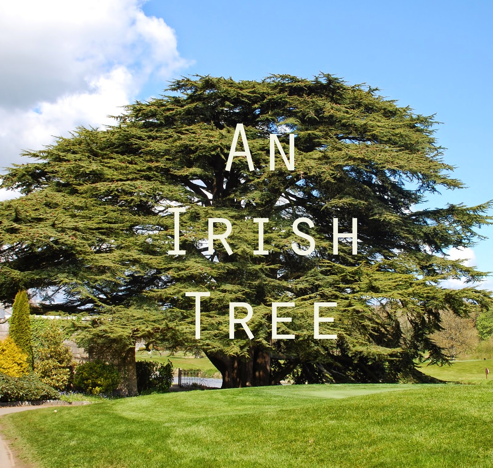 An Irish Tree