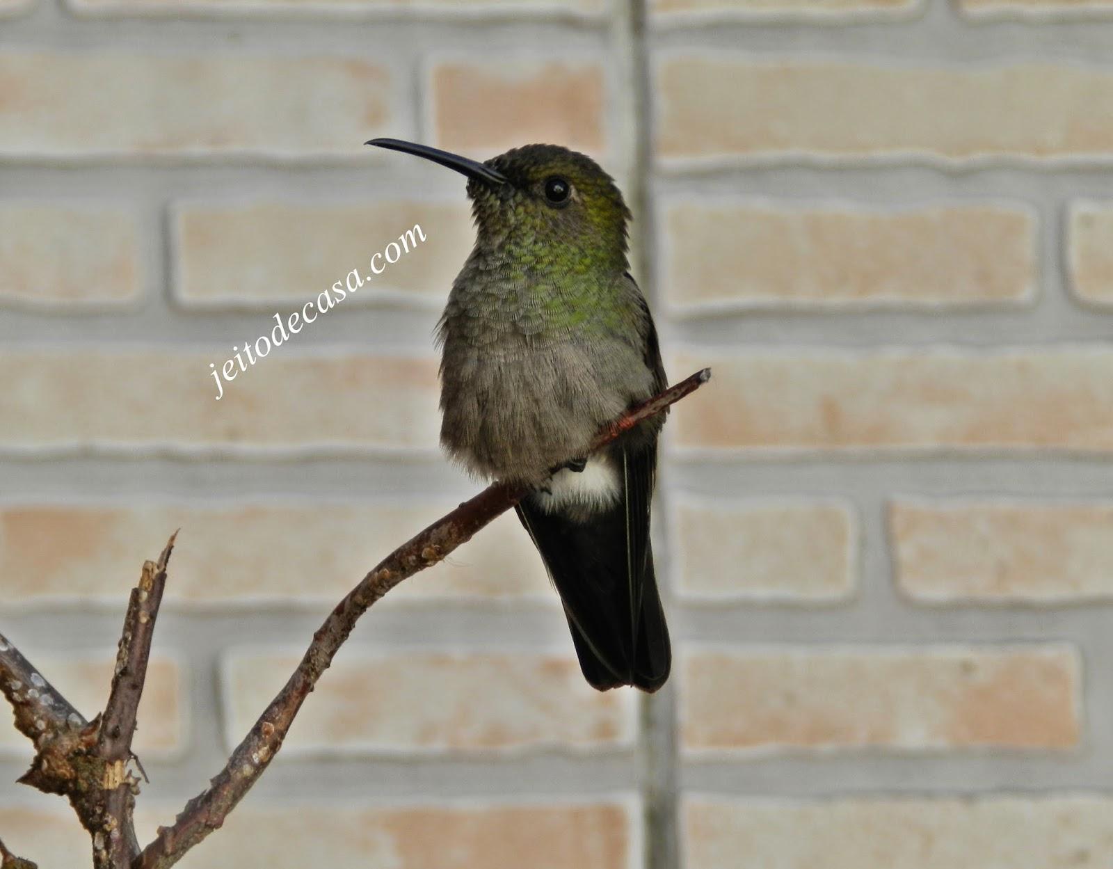 Pássaros livres aqui em casa...
