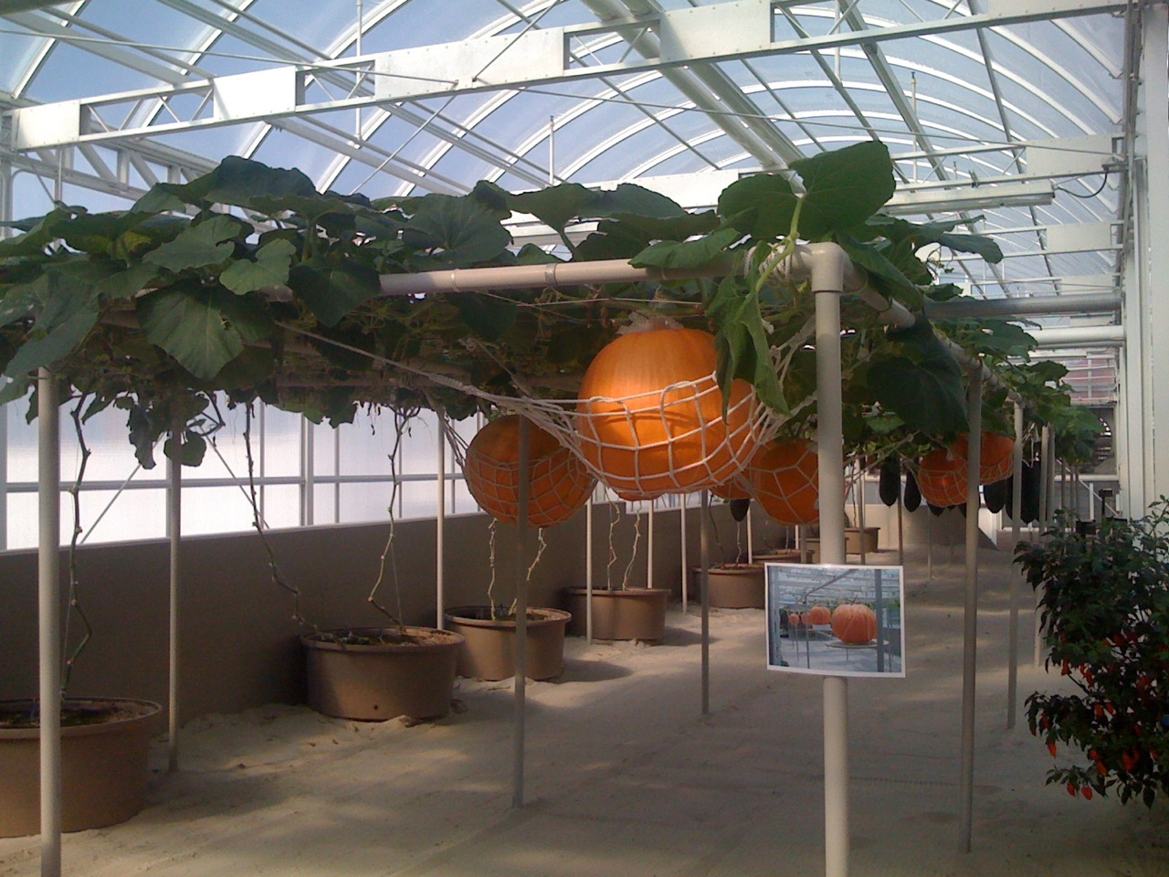 giant-pumpkins-seeds-of-life-tour-epcot-disney