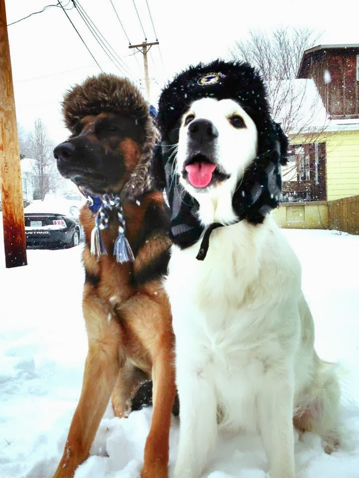 Cute dogs - part 3 (50 pics), dogs in snow