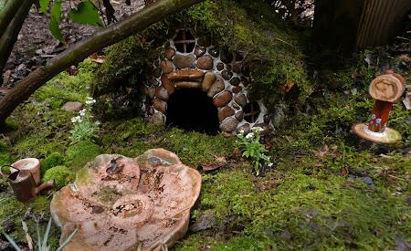 Linda's Toad habitat