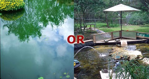 Green or Clear Pond