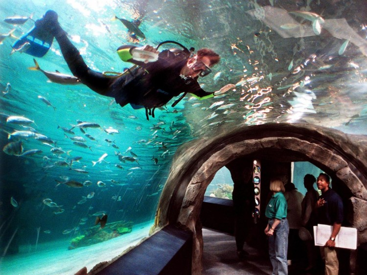 Tourism Oregon Coast Aquarium