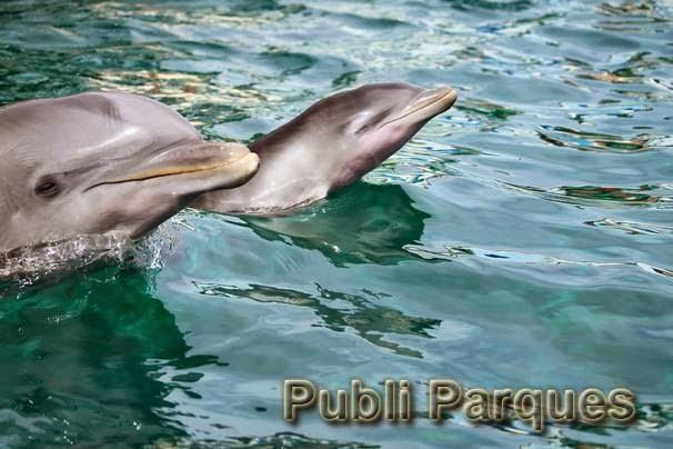 Cría de delfín