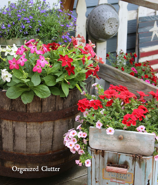 Colorful Annuals In A Barrel & Ice Cream Freezer www.organizedclutter.net