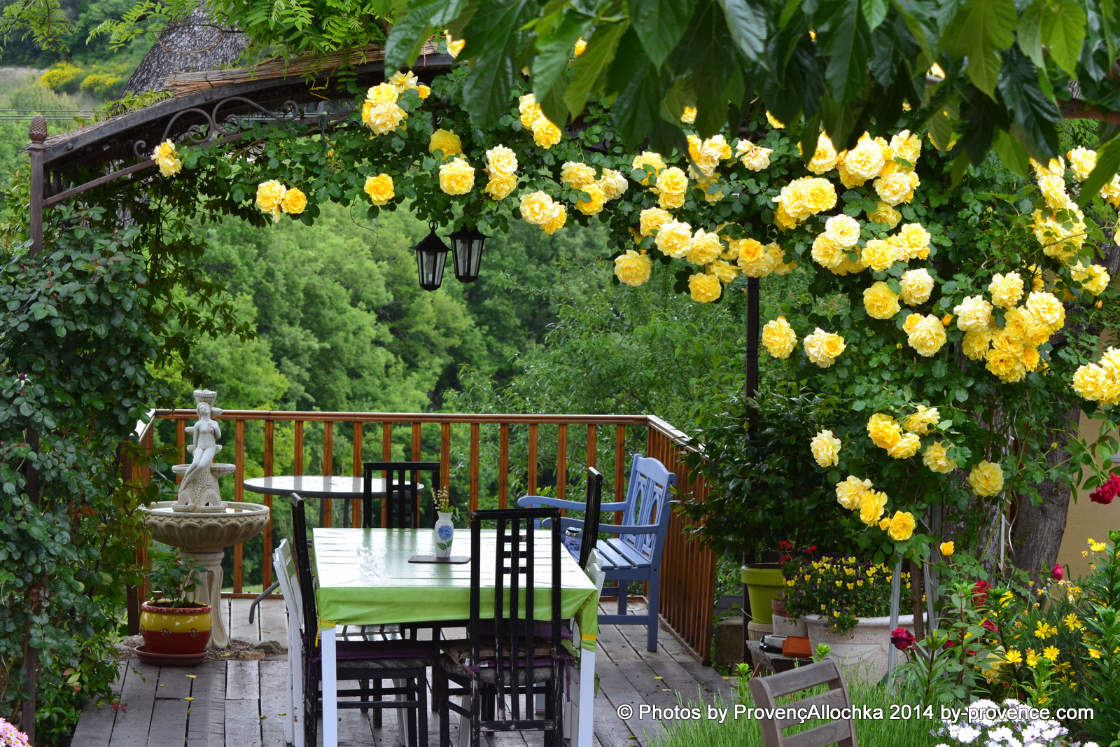 rose jaune,provence