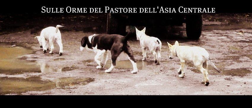 SULLE ORME DEL PASTORE DELL'ASIA CENTRALE