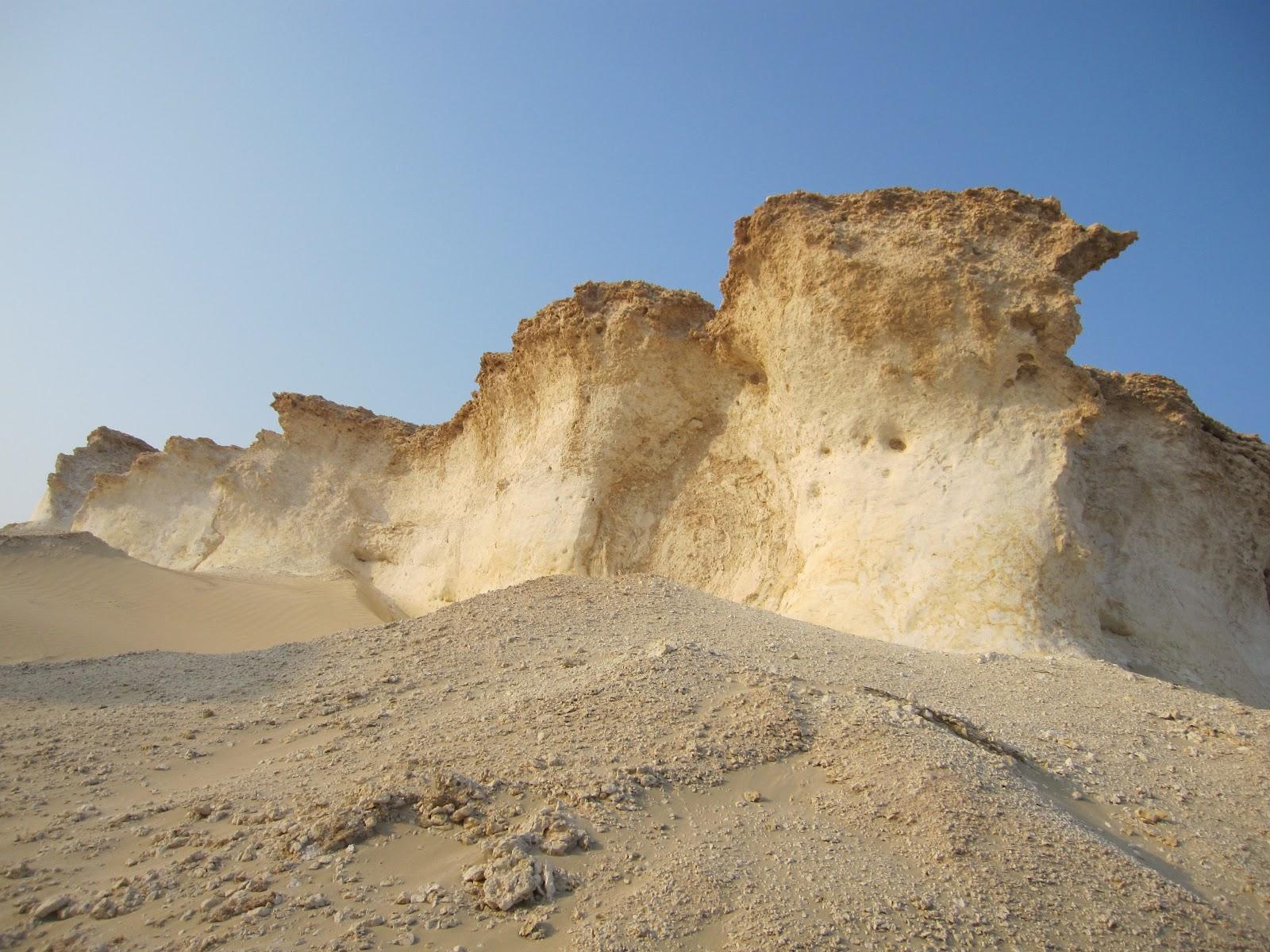 desert mushrooms of qatar