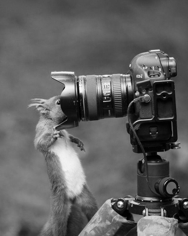 http://1.bp.blogspot.com/-igTo8iGPxRs/UiSIrz2ckfI/AAAAAAAAYP8/yFFRPX-hbWc/s1600/eekhoorntje+met+camera.jpg