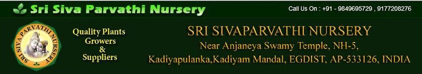SRI SIVA PARVATHI NURSERY