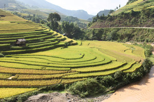 Terraced rice fields in Chế Cu Nha commune