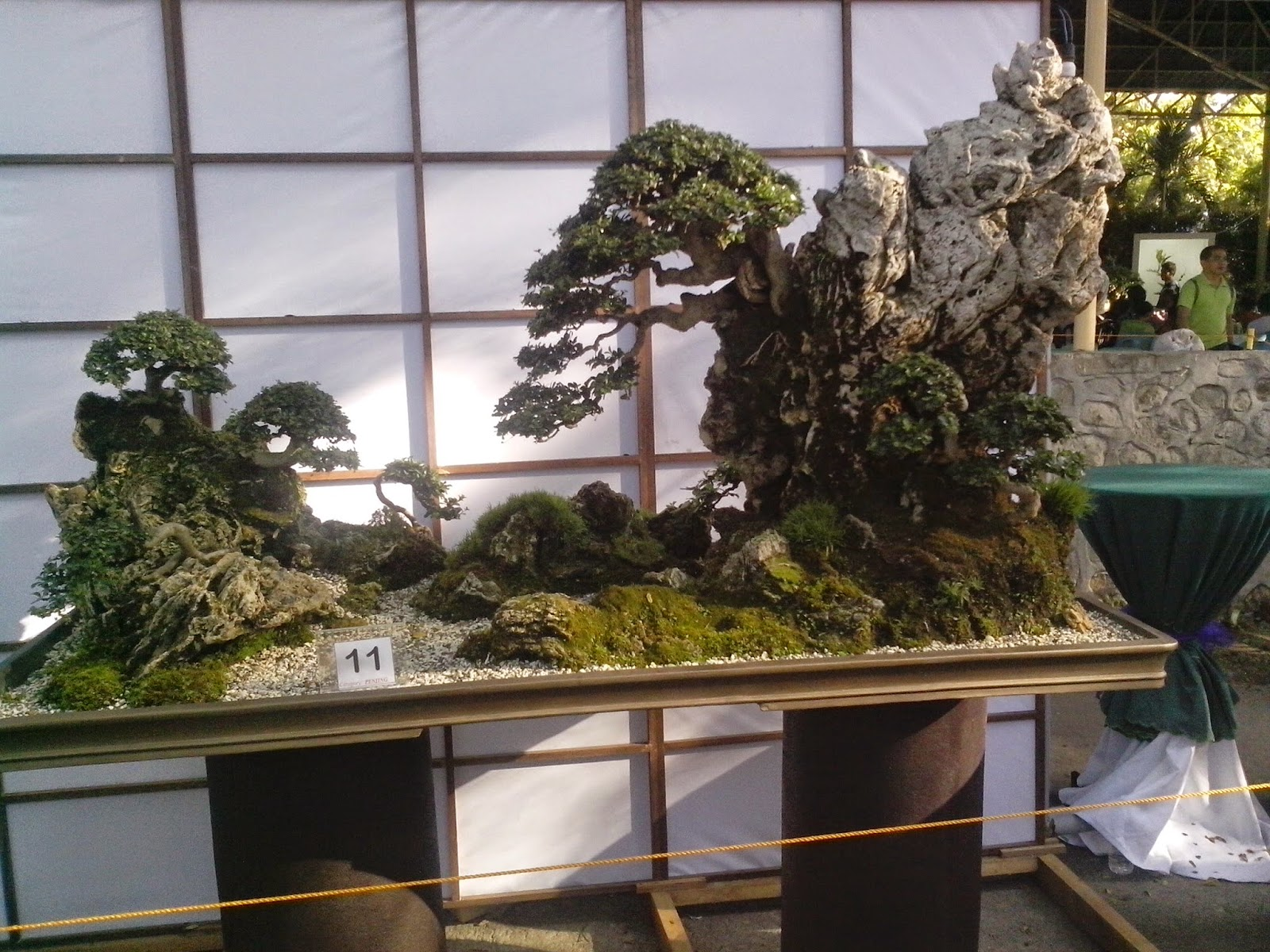 Random Thoughts Bonsai Penjing And Suiseki What39s That