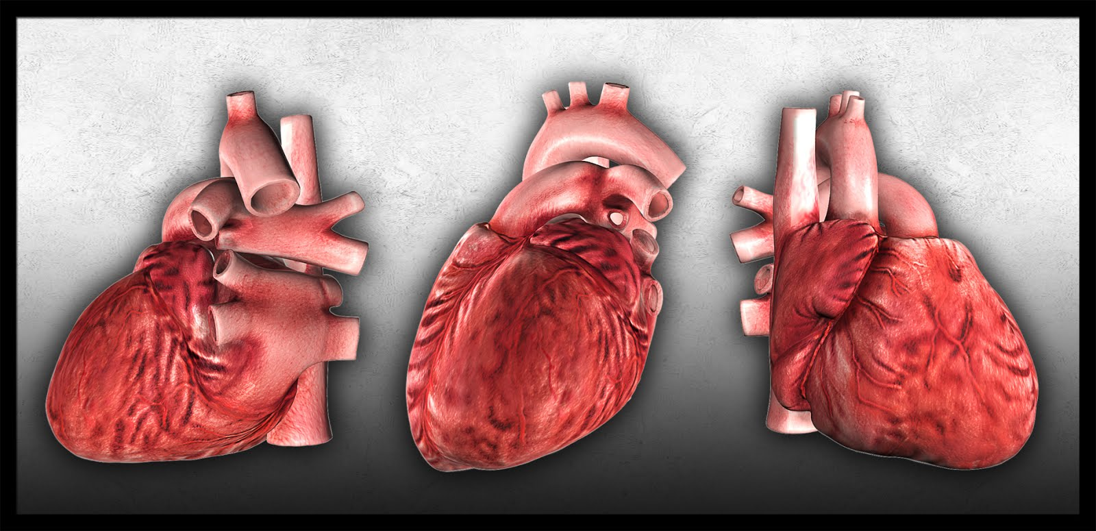 Real human heart images - photo#15