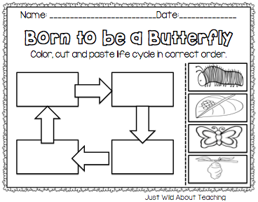 Butterfly Life Cycle Worksheet: Common Worksheets » Butterfly Cycle Worksheet   Preschool and    ,