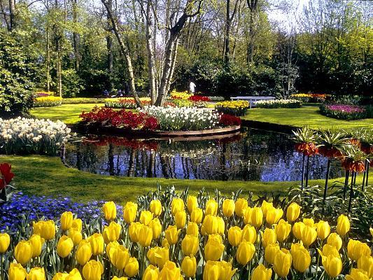 hinh nen hoa tulip , y nghia hoa tulip , hoa tulip dep , giá hoa tulip
