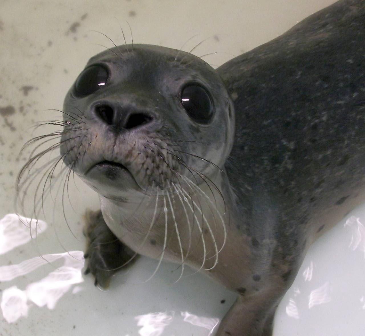 Funny animals of the week - 14 February 2014 (40 pics), seal cub looks sad